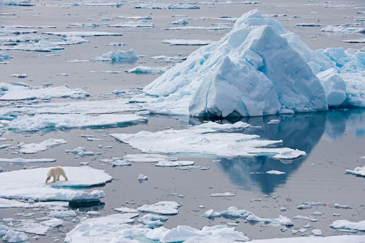 Lední medvěd na ledové kře