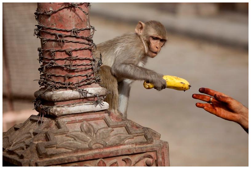 Planeta opic - Džajpur