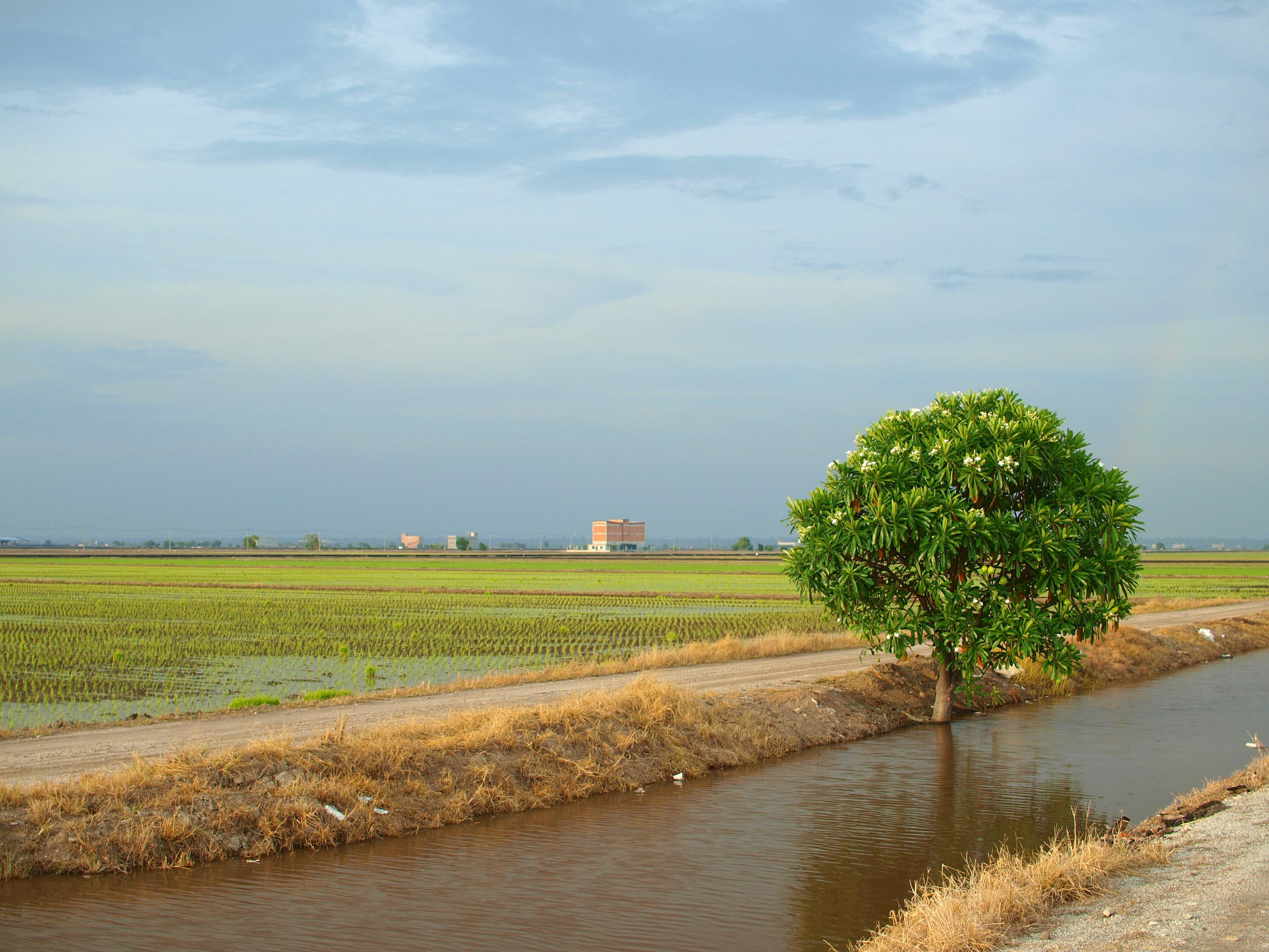 Digonála v podobě řeky je doplněna výrazným stromem a ideálně umístěným horizontem