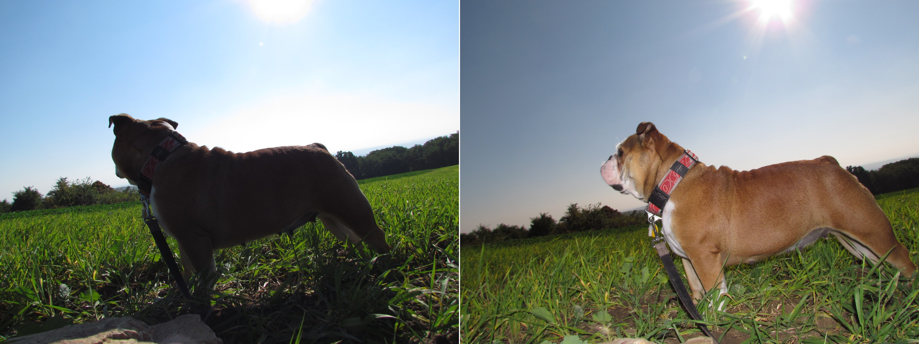 Vlevo je snímek bez použití blesku, vpravo pak s automaticky spuštěným bleskem v protisvětle