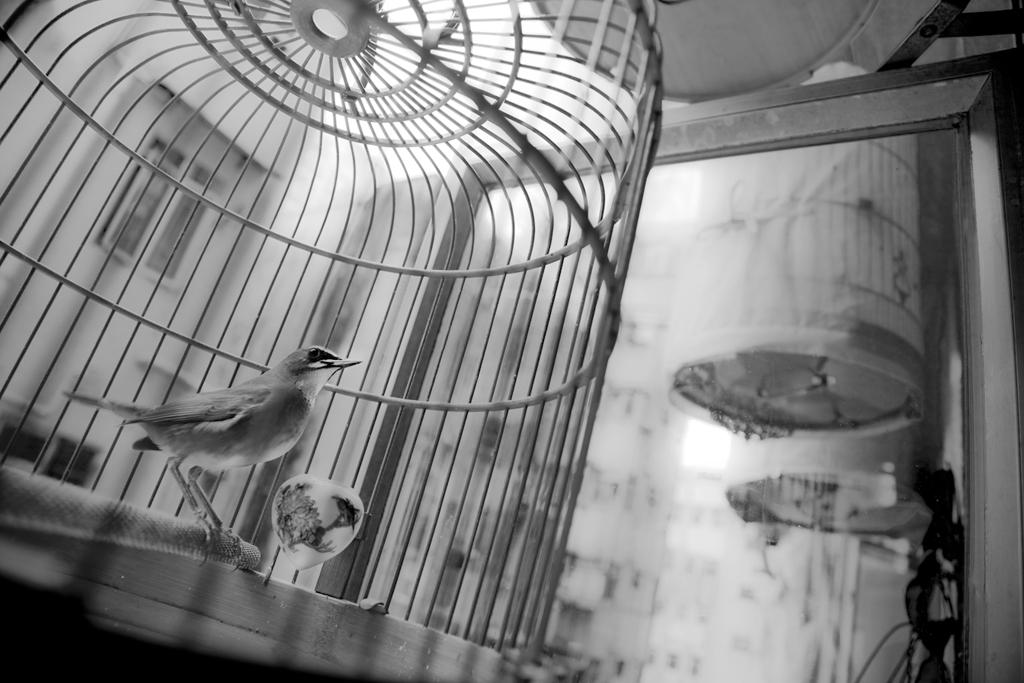 Hong Kong, Pet Bird