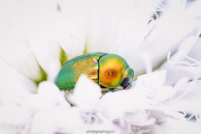 Duhový brouček