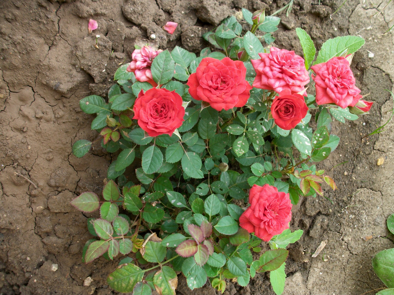 """""""pseudomakro"""" – líbí se nám květina v záhonku, přijdeme k ní a vyfotíme, vše navíc završeno takřka středovou kompozicí"""