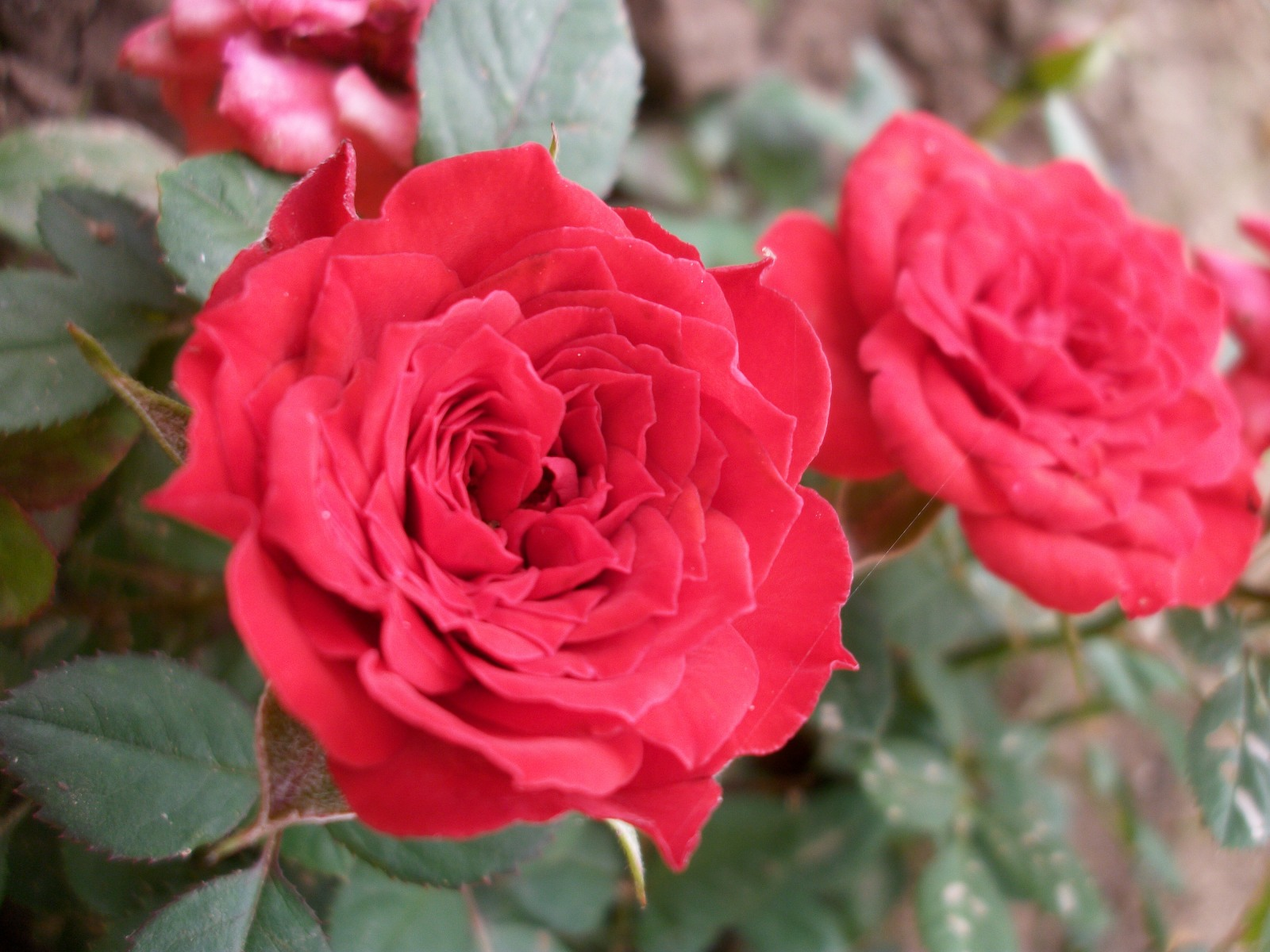 O poznání lepšího výsledku dosáhneme, když se skloníme ke květině, vybereme zajímavý detail a poté exponujeme