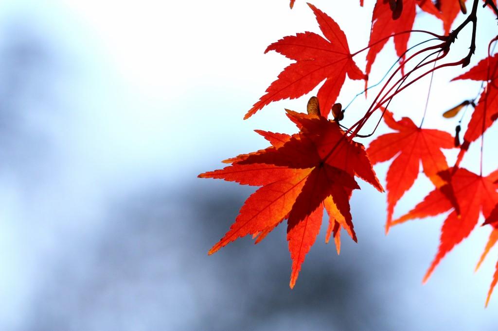 Kontrast barevných listů a jednolitého pozadí s namodralým nádechem je velmi efektní - i takto málo stačí pro dobrou fotku