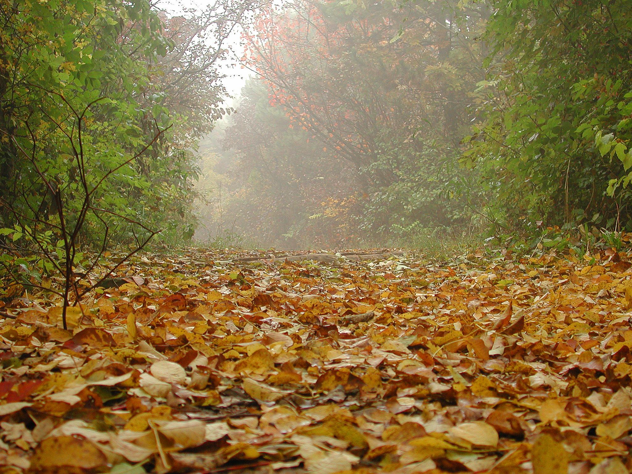 Typická ukázka podzimní krajiny, kde je součástí kompozice i mlžný opar, i s ním se dá na podzim kreativně pracovat