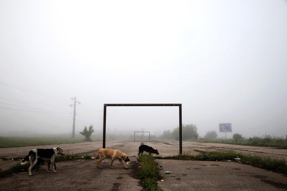 Lipljan, Kosovo. June 3, 2014. (Hazir Reka/Reuters)