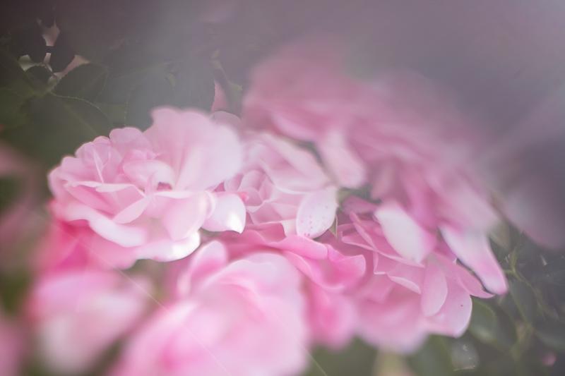 Květiny se spoustou efektů běžně hodnocených jako optické chyby. Canon EOS 5D Mark II, Sigma 50 mm F1,4, 1/1600 s, F1,4, ISO 50, ohnisko 50 mm.jpg