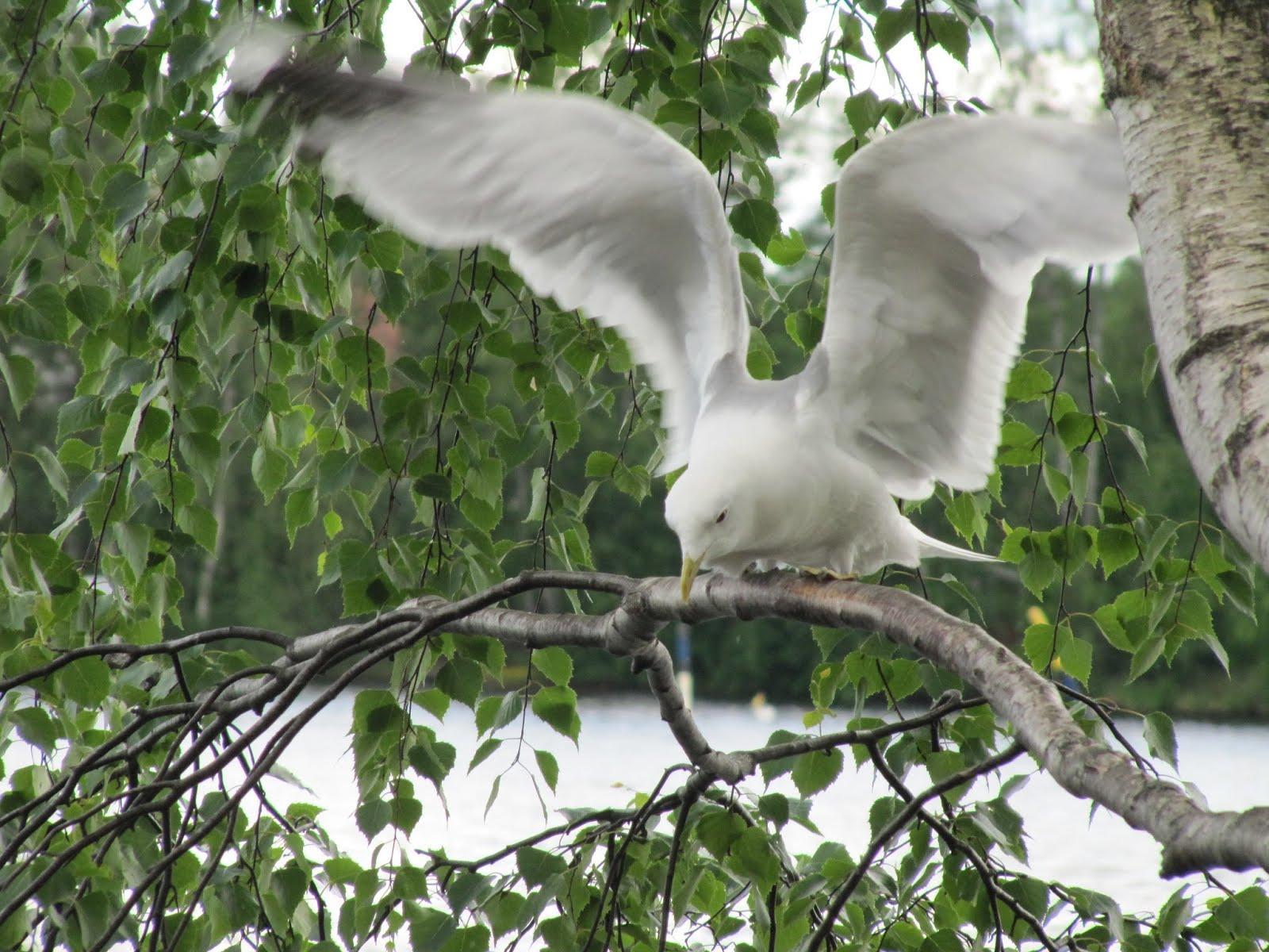 4 - finland - bird