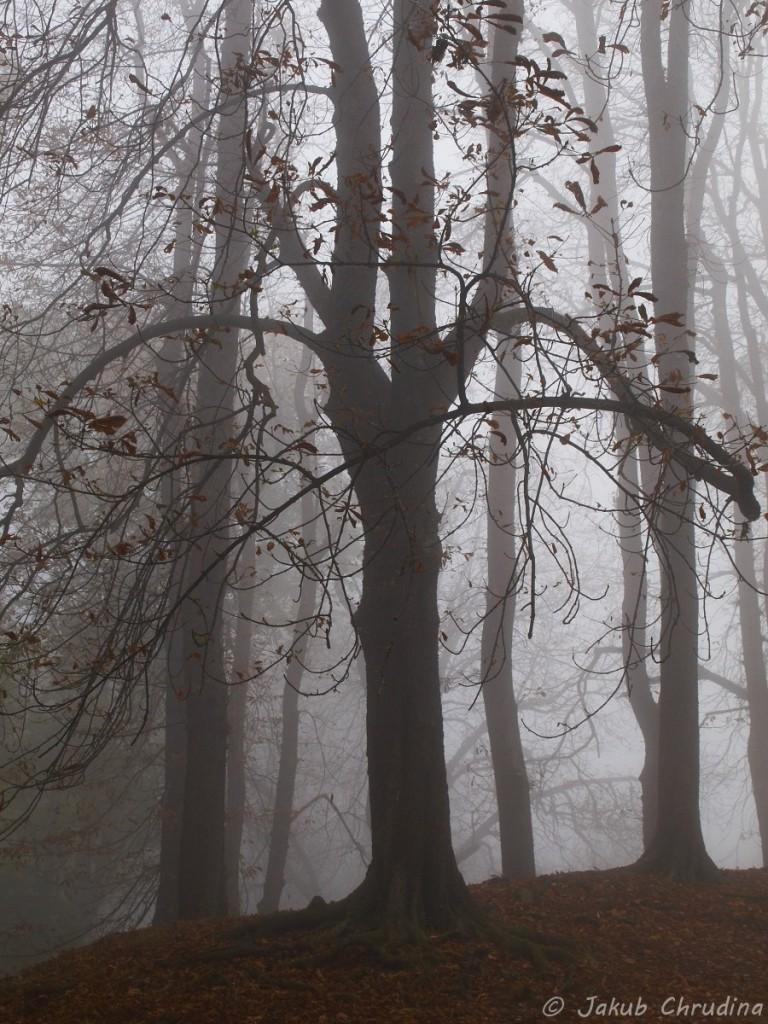 Podzimní obora Hukvaldy. Olympus E-420, Olympus ZUIKO 14-42/3.5-5.6, ohnisko 12mm, ISO 200, f 9, 1/160s