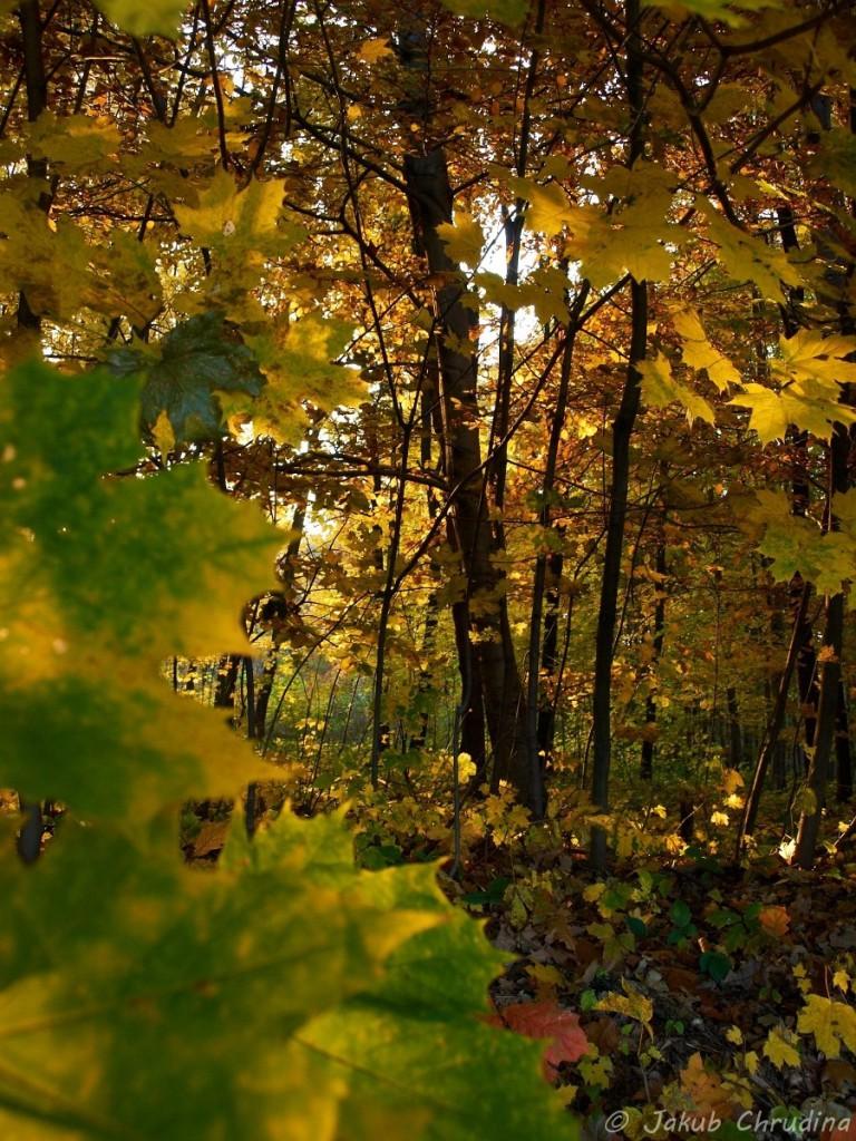 Listí zase trochu jinak – podzim v lesoparku. Olympus E-420, Olympus ZUIKO 14-42/3.5-5.6, ISO 400, ohnisko 14mm, f 5.6, 1/50s