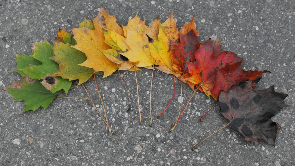 Barevná paleta podzimního listí.  Canon EOS 70D, Canon EF35mm, f/1.4L USM. 1/80 s, F2.8, ISO 400.jpg