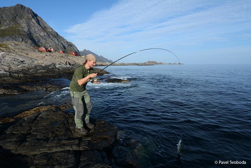 Rybaření, Lofoty, Norsko
