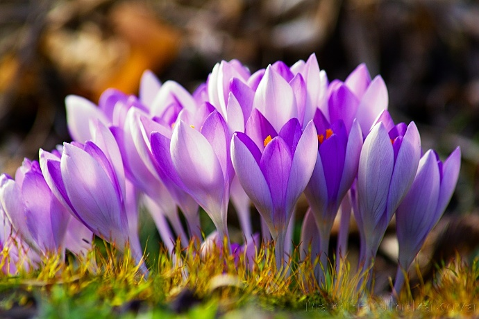 Alle Frühlingsfarben ein einem Bild. Autor: Martina Jindráková