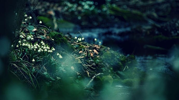 Velmi pěkná kompozice. Rozmazaná tráva v pozadí dodává fotce originální rozměr, tmavé pozadí zase tajuplný nádech.  Autor: Roman Hudec