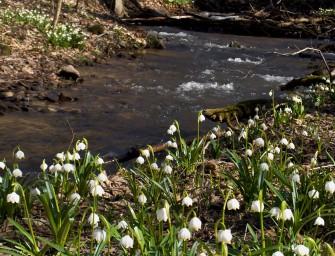 Květy jara na jihu Moravy aVysočině
