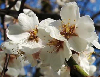 Zaostřeno na jarní květy