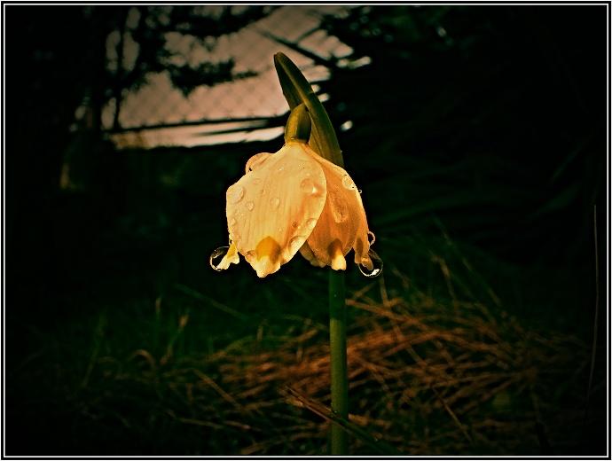 Simpel und schön. Die bearbeiteten Farbtöne verleihen dem Foto einen melancholischen Unterton und die Mittelpunk-Komposition passt zum Bild. Autor: VzV
