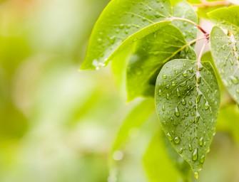 Nejzajímavější snímky pořídíte po dešti