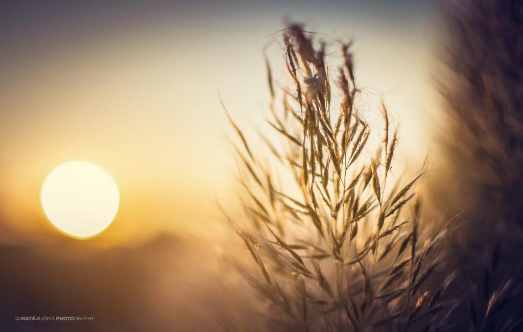Detail se sluncem v pozadí (Nikon D7000, Nikon 35mm f/1.8).jpg
