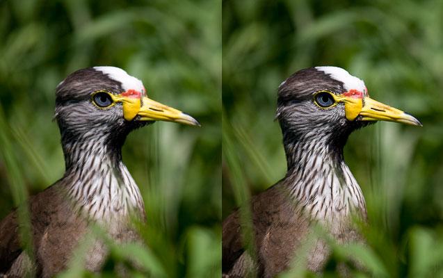 Výstupní doostření bylo použito jen na obrázku vpravo (možná lehce přehnané). Ve srovnání s ním vypadá fotografie vlevo rozmazaně.jpg