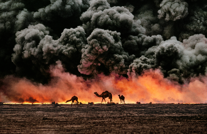 "Al Ahmadi, Kuwait, 1991, KUWAIT-10001. Camel and Oil Fields Sandwiched between blackened sand and sky, camels search for untainted shrubs and water in the burning oil fields of southern Kuwait. Their desperate foraging reflects the environmental plight of a region ravaged by the gulf war. Canby, Thomas Y. (August 1991) ""The first Gulf War taught us a new lesson in unconventional conflict. Saddam Hussains army filled the skies of southern Kuwait with black poignant smoke from the burning oil lines. It was a powerful, debilitating symbol. And there was another. McCurry, who was covering the war, saw camels running in terror from the fires. Both images -whether of the fires or of the animals- were powerful representations of the chaos of that time. Central to McCurrys reputation as a journalist is his discipline to wait, and to search, and then to recognize the most telling image. The juxtaposition of the fire and smoke and camels running amok creates an icon of that war."" - Phaidon 55 National Geographic, Vol. 180, No. 2, pgs. 2-3, August 1991, The Persian Gulf: After the Storm Magnum Photos, NYC107607, MCS1991003K213. Phaidon, 55, Iconic Images, final book_iconic, final print_milan, iconic photographs As his army retreated from Kuwait, Saddam Hussein ordered the ignition of the oil fields that scatter the country. The effect was an ecological disaster of unimaginable scale. These camels are running from the fires. It is a futile effort: soon they will covered in oil that rains down from the sky. Struggling camels silhouetted against the oil-fire, al-Ahmadi oil field, Kuwait, 1991. Pg 88,89, Untold: The Stories Behind the Photographs Steve Mccurry_Book Iconic_Book Untold_book Milan_Exhibit_'09 final print_Sao Paulo final print_MACRO MAX PRINT SIZE: 40X60 Retouched_Sonny Fabbri 03/25/2014"