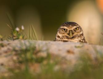 Zonerama výběr: Ptáci v hledáčcích fotoaparátů