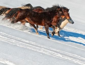 Jak fotoaparátem elegantně zachytit pohybujícího se koně
