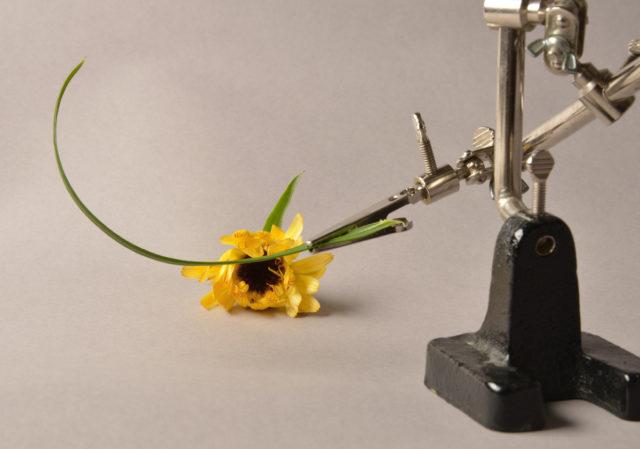 Příprava na focení kapek vody: květina přichycená v držáku.