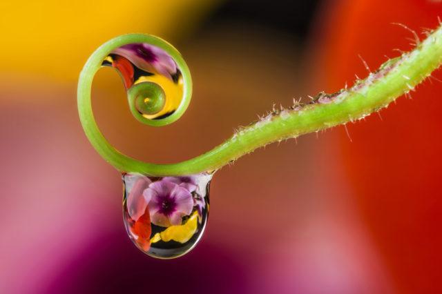 Kapka vody, ve které se zrcadlí květ