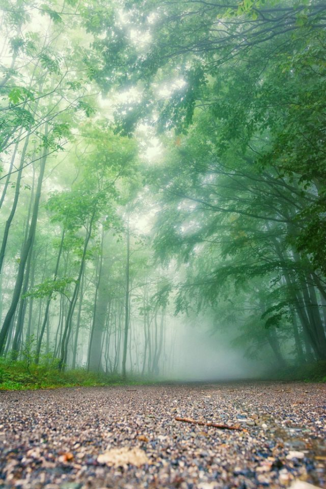 Jak fotit a upravit krajinu v mlze: lesní cesta