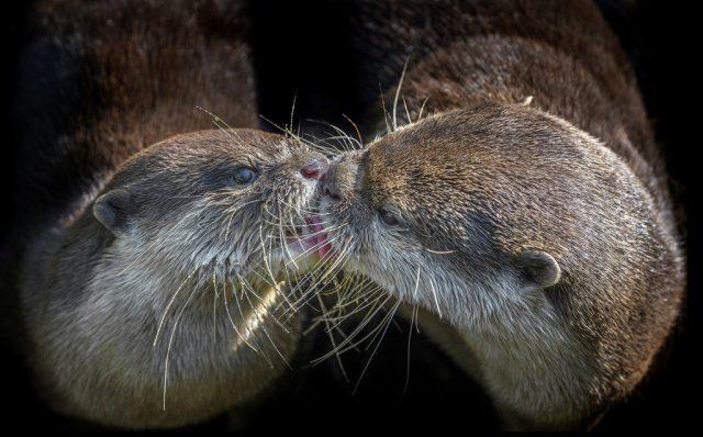 Jak fotit zvířata v zoo: vydry.