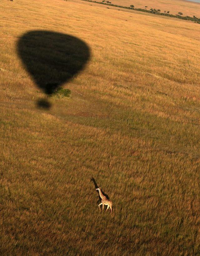 Archa světel a stínů: žirafa focená z balonu. Archiv Jana Svatoše.