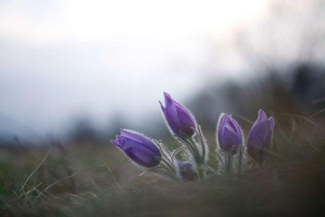 Jak upravovat fotky květin: Originální foto