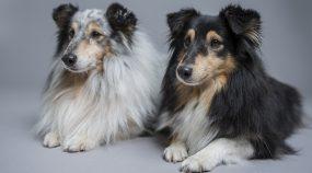 Fotografování psů: získejte krásné psí portréty doma i venku