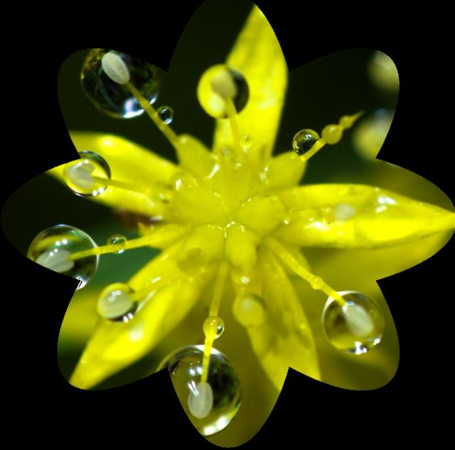 Jak vytvořit kruhový ořez: ořez ve tvaru květu.