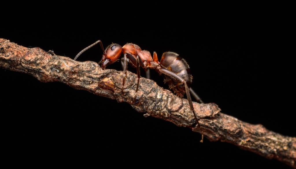 Jak fotit makro v přírodě - mravenec na klacku