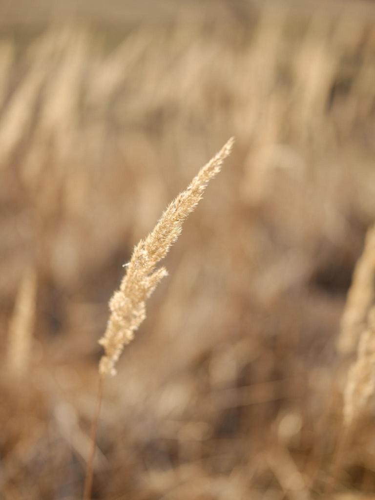 Recenze Fujifilm GFX50s: vzorový snímek – tráva.