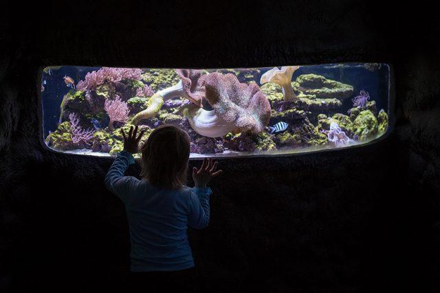 Focení dětí v protisvětle: dítě před osvětleným akváriem v tmavé místnosti