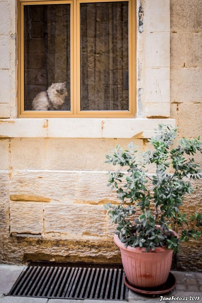 Focení koček - jiný pohled