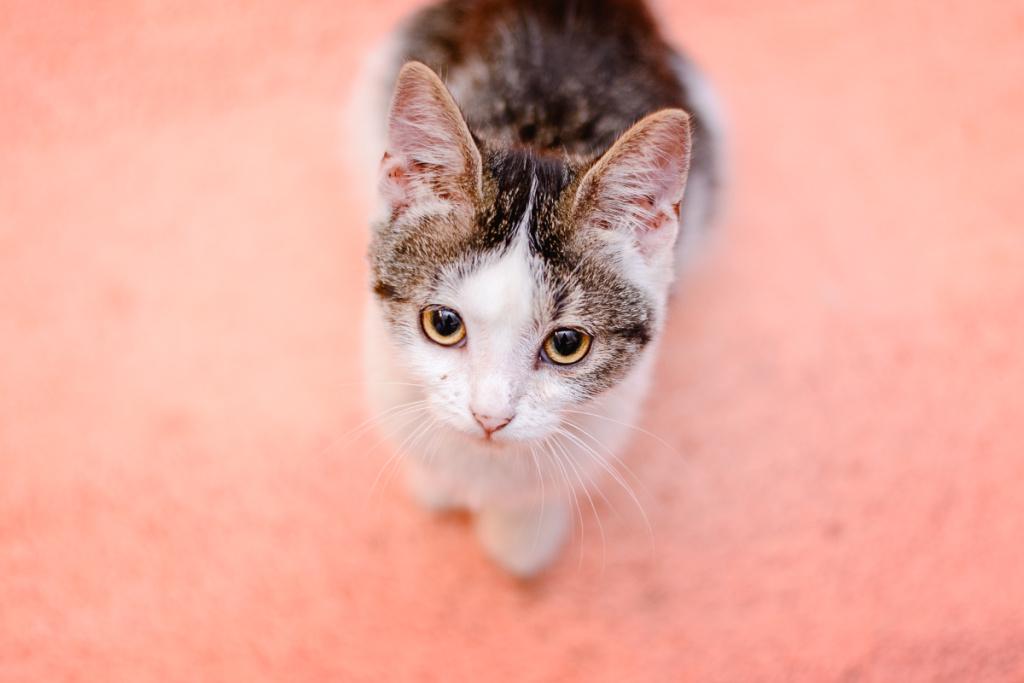 Focení koček - pohled shora