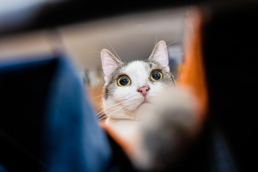 Focení koček - pohled zespodu