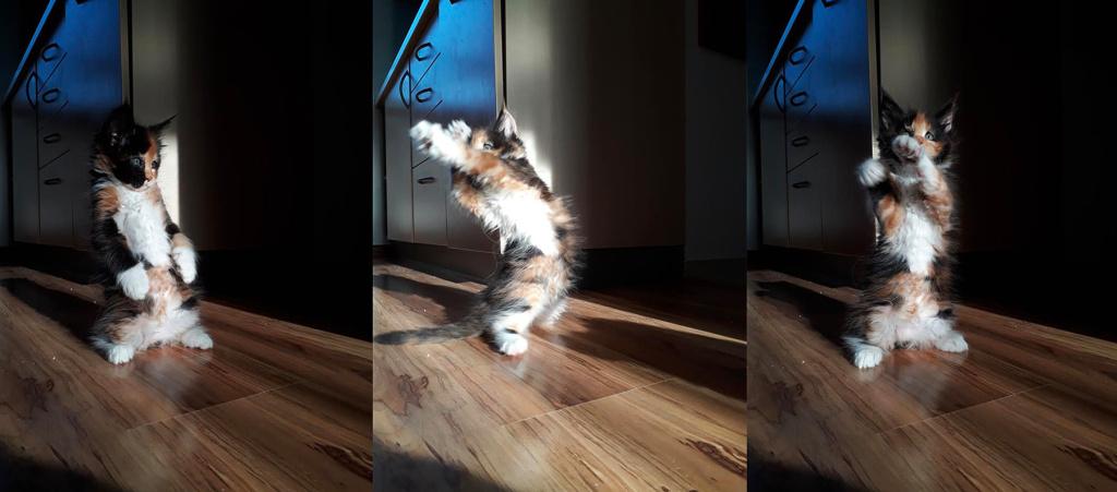 Focení koček - kočičí jóga