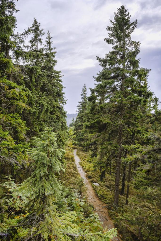 Fotografování krajiny jinak - stromy