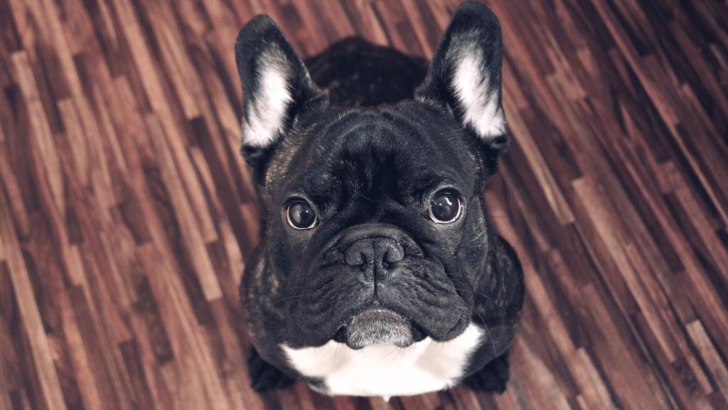 Jak fotit psy - Ralf
