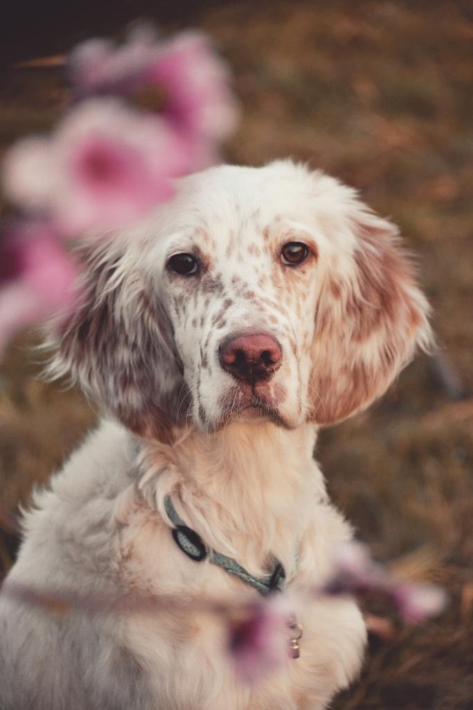 Jak fotit psy - Vilík