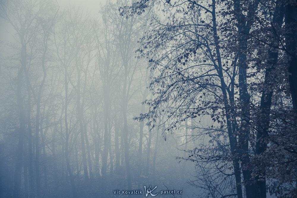 Jak v mlze nafotit detaily krajiny - les v mlze