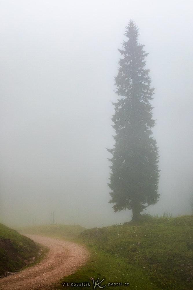 Jak v mlze nafotit detaily krajiny - samotný strom v mlze