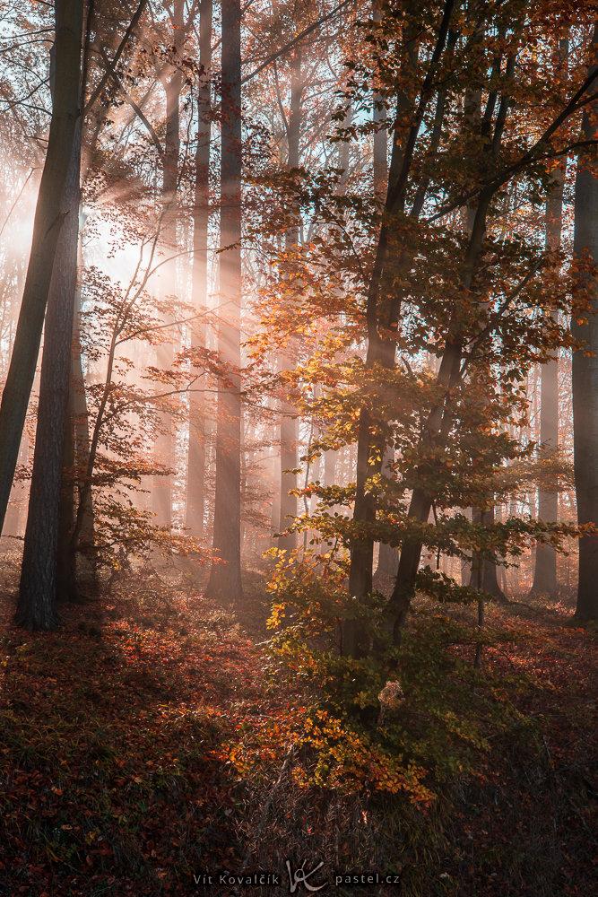 Jak v mlze nafotit detaily krajiny - paprsky slunce v mlze