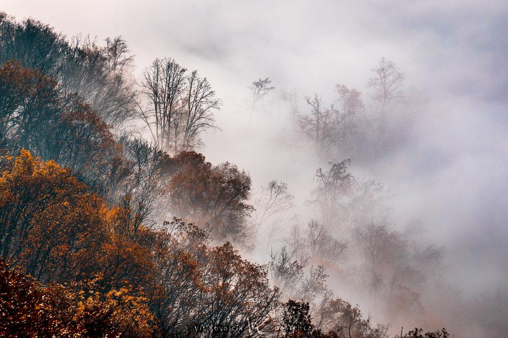 Jak v mlze nafotit detaily krajiny - nadhled na stromy v mlze